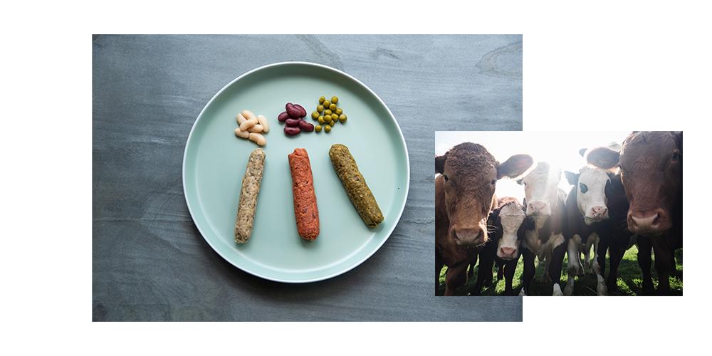 Fleischloserei Lebenkäs biologisch DER Neubaumarkt